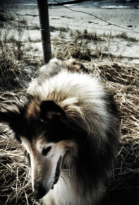 Bye bye, love - - - Lost my dog :(