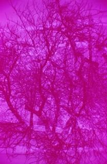 Doppelbelichtung in pink, die Vierte.
