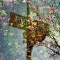 (c) Lomoherz - Sign
