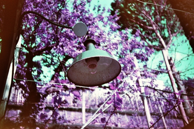 LomoChrome Purple (c) Lomoherz (11)