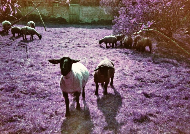 LomoChrome Purple (c) Lomoherz (19)