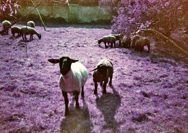 LomoChrome Purple (c) Lomoherz (19)