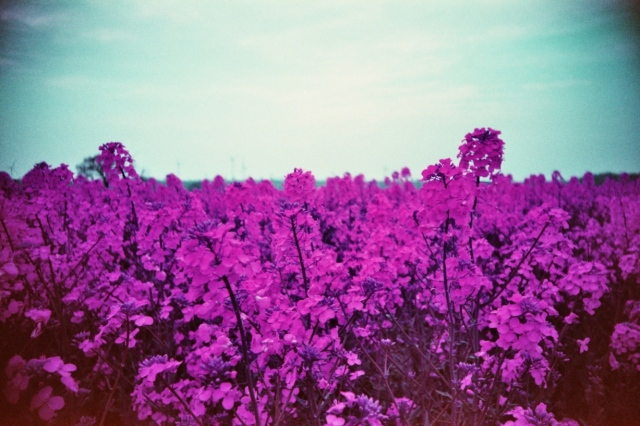 LomoChrome Purple (c) Lomoherz (21)