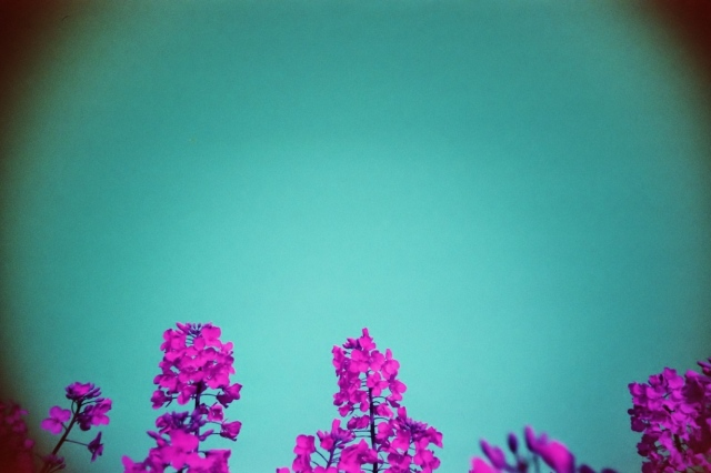 LomoChrome Purple (c) Lomoherz (22)