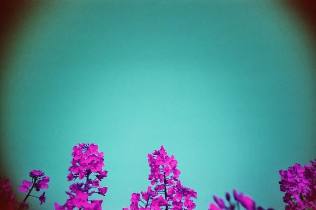 LomoChrome Purple (c) Lomoherz (22)